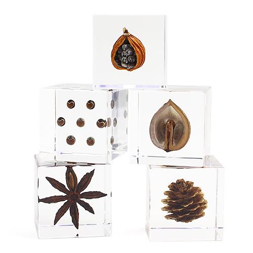 宙-sola- そら/植物立体標本「sola cube ソラキューブ」種子(5種)