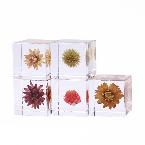 宙-sola- そら/植物立体標本「sola cube ソラキューブ」花(4種)