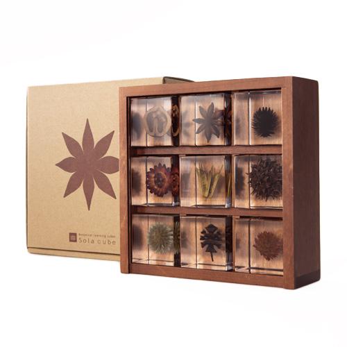 宙-sola- そら/「sola cube ソラキューブ」植物立体標本 木箱セット