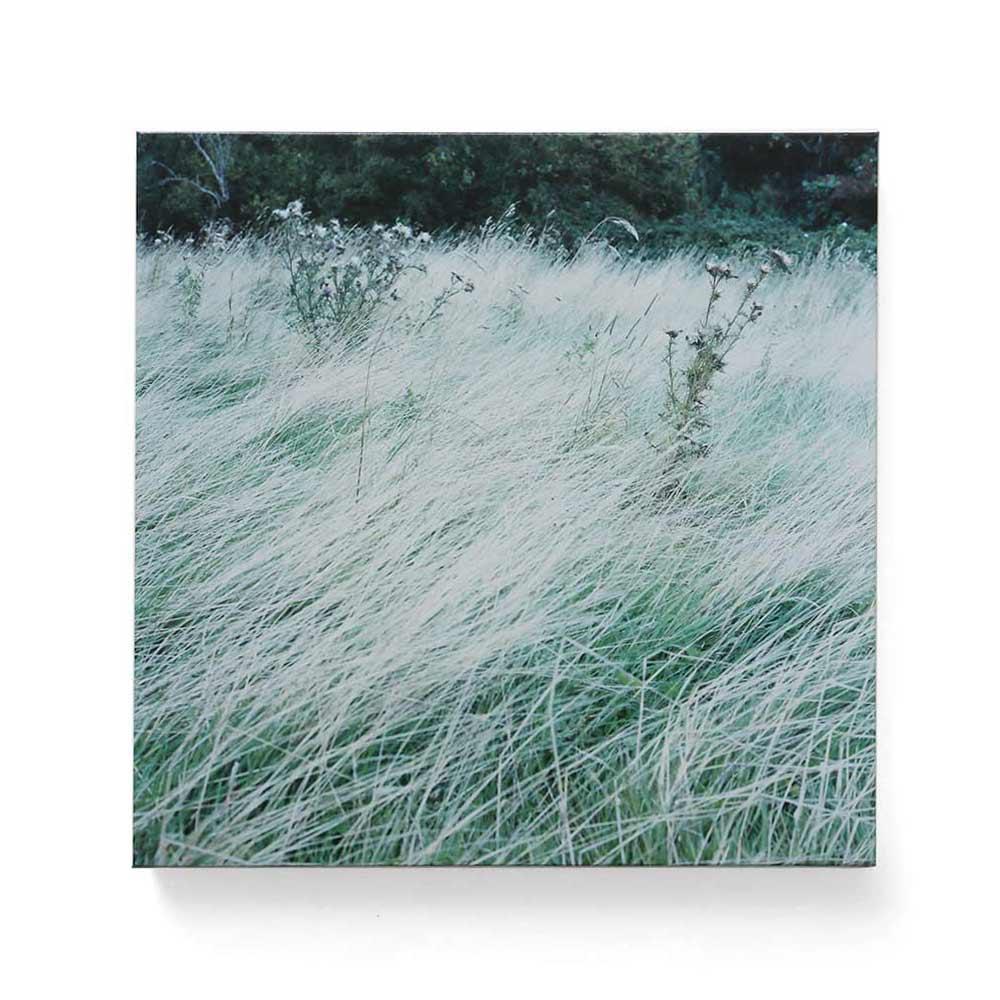英国の草原